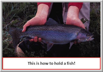 How to hold a fish