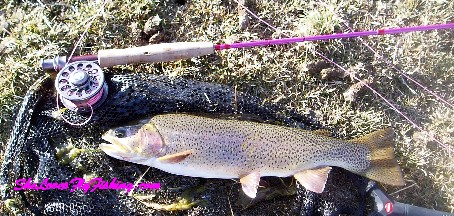 Silverthorne Trout